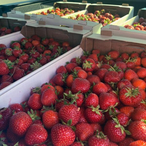 MySnack maasikad 1kg külmutatud